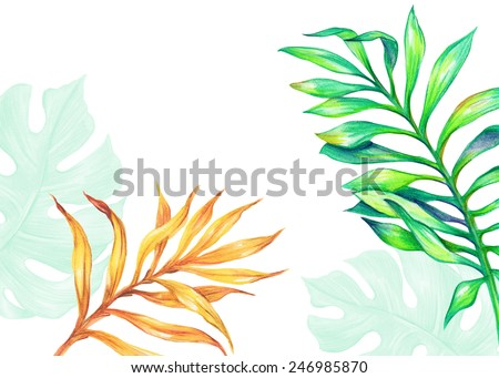 abstract tropical palm leaves, jungle plants, watercolor illustration isolated on white background - stock photo