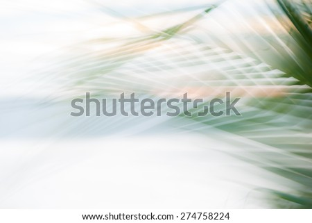 Abstract tropical palm tree leaves in motion against sunlight background  Blurred leaves in pastel colors moving in summer wind on the beach Miami Florida - stock photo