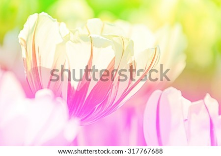Abstract tulip on concept blurred and soft tone color ,This image, process is blurred. To spread soft feel about love, dreams are appropriate to place a background image for related content - stock photo