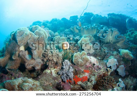 Abstract underwater scene, colorful coral reef. - stock photo