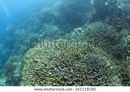 Abstract underwater scene, Coron , Palawan, Philippines.