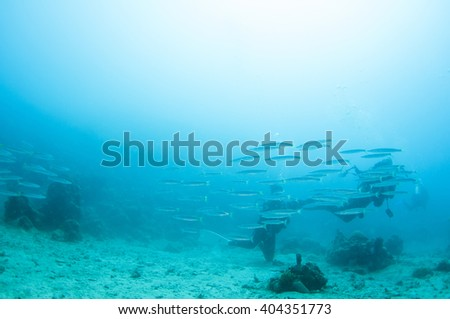 Abstract underwater scene, group of fish and scuba divers.