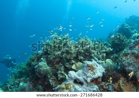 Abstract underwater scene, hard coral reef bottom.