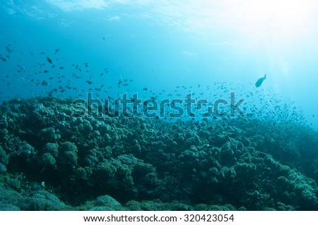 Abstract underwater scene of Lembongan, Nusa Lembongan Island, Bali, Indonesia.