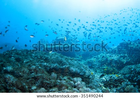 Abstract underwater scene of Tulamben, Bali, Indonesia.