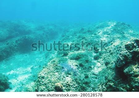Abstract underwater scene, sea bottom. - stock photo