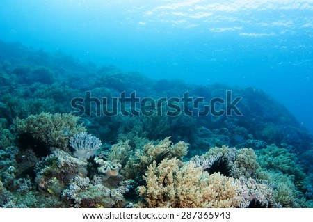Abstract underwater scene, sun rays and coral reef.
