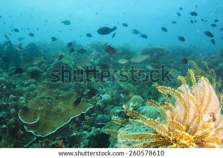 Abstract underwater scene sun rays in deep blue sea, Coron , Palawan,  Philippines. - stock photo