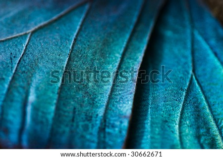 Abstract view of a Blue Morpho butterfly's wing - stock photo
