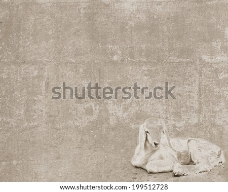 Abstract vintage textured background with a sketch of cute white goatling lying - stock photo