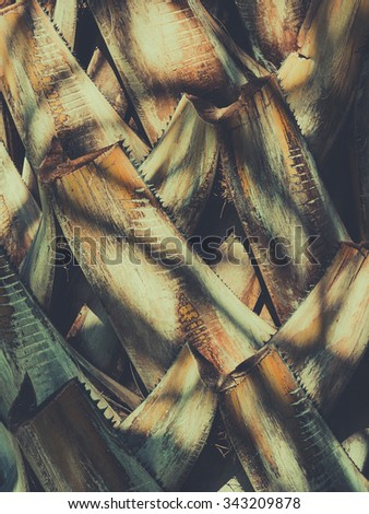 Abstract vintage tropical natural pattern. Palm bark texture. retro toned. - stock photo