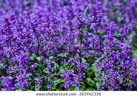 abstract violet flowers on field - stock photo