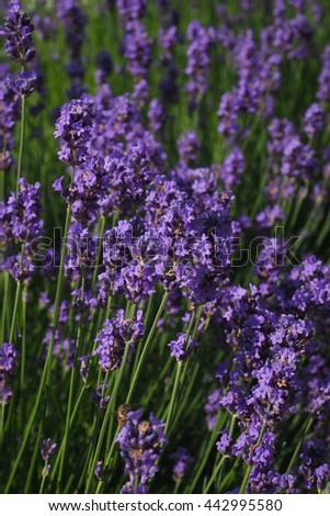 Abstract violet flowers on garden - stock photo