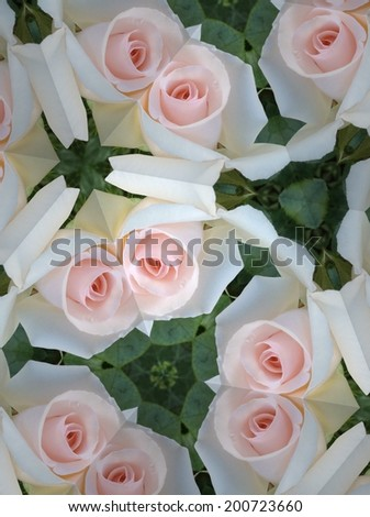 Abstract white rose background