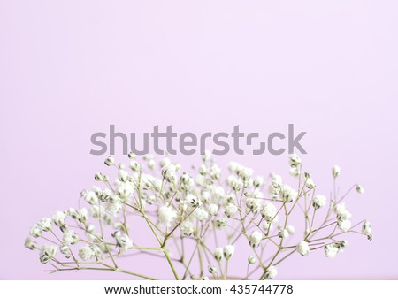 Abstract white tiny flowers (Gypsophila) on soft color background and Soft airy focus and copy space  - stock photo