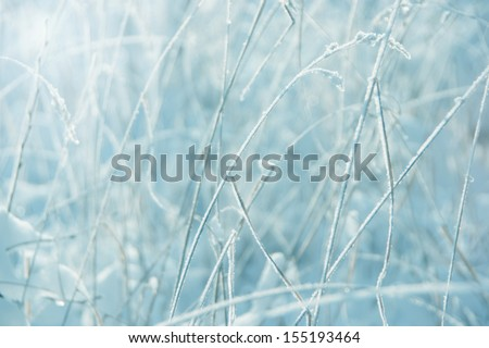 abstract winter background (out-of-focus frost field) - shades of light blue - stock photo