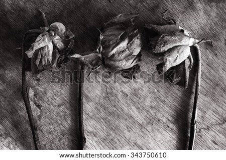 Abstract Withered rose on wooden background / Withered rose  - stock photo