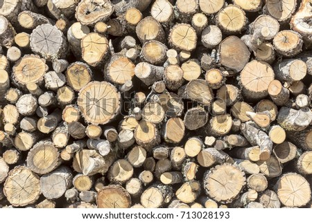 Abstract wooden texture of firewood from olive (background)