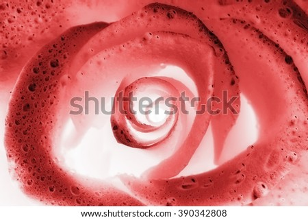 abstract x-ray image of rose flower  - stock photo