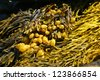 Abstract - yellow & brown kelp swirling patterns on tidepool rocks,Mount Desert Island, Acadia National park, Maine, New England - stock photo