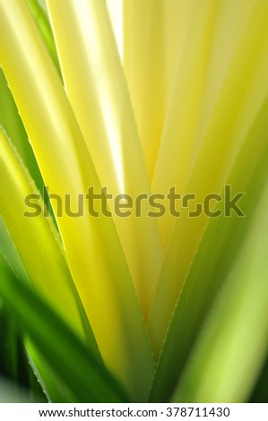 Abstract yellow cactus leaf - stock photo