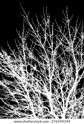 abstraction, white tree branches on a black background - stock photo