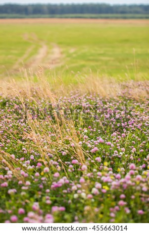 Abundance of blooming wild flowers on the field - stock photo
