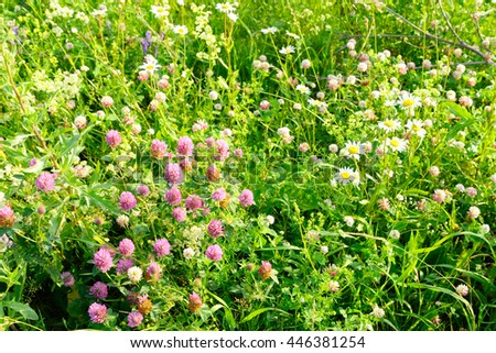 Abundance of blooming wild flowers on the meadow at summer. - stock photo