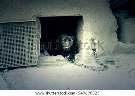 Abused dog, domestic animal detail shabby ,background of abuse and pain