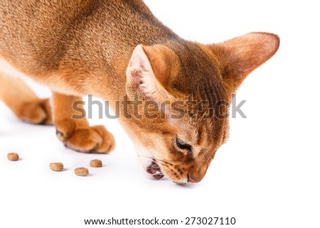 Abyssinian cat food Isolated on white background - stock photo