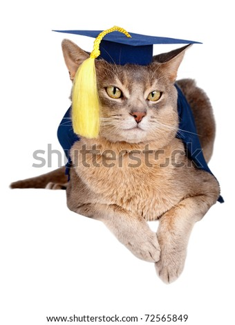 Abyssinian cat in graduation cap and gown isolated on white - stock photo