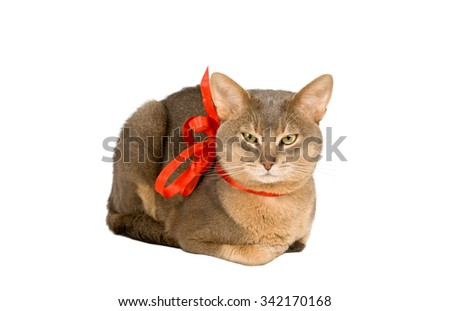 Abyssinian cat wearing red bow isolated on white