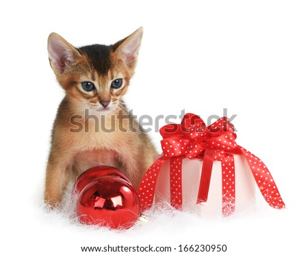 Abyssinian cute kitten with christmas balls and gift box isolated on white background