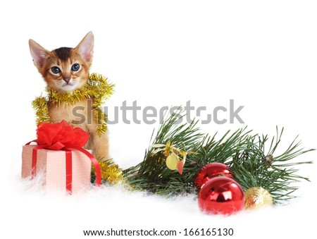 Abyssinian cute kitten with christmas tree and gift box isolated on white background