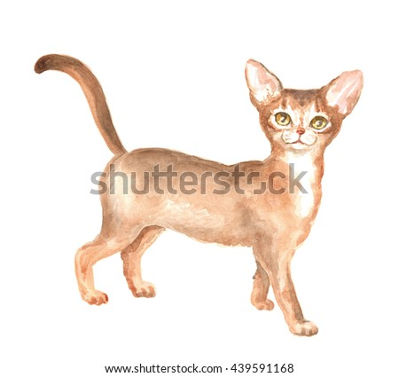 Abyssinian kitty. Image of a thoroughbred cat. Watercolor painting.