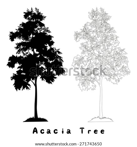 Acacia tree with leaves and grass, black silhouette, contours and inscriptions on white background.  - stock photo