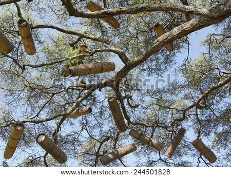 Acacia with beehives, Great Rift Valley, Ethiopia, Africa - stock photo