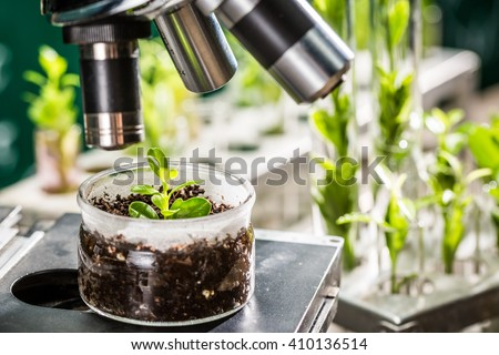 Academic laboratory exploring new methods of plant breeding - stock photo