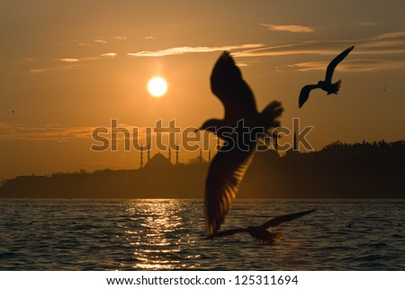 Accompanied by seagulls at sunset silhouette of Istanbul. - stock photo