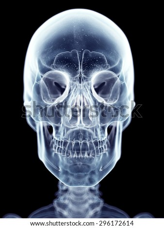 accurate medical illustration of the skull - stock photo