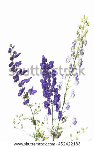 aconite on a white background
