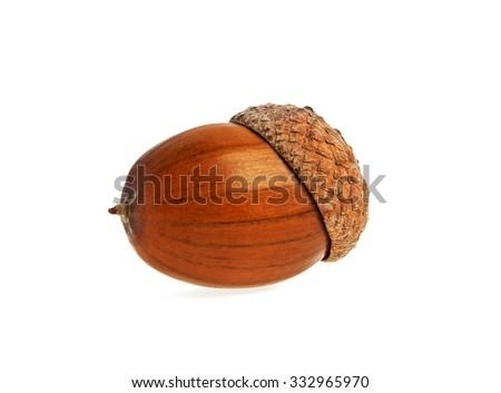 Acorn isolated on white background - stock photo
