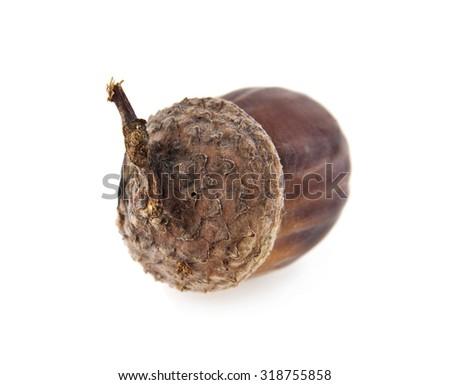 acorn on a white background - stock photo