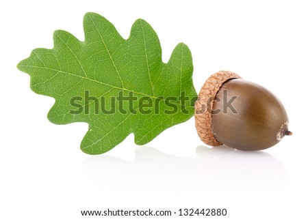 acorn with green leaf isolated on white background - stock photo