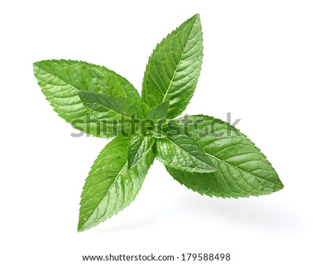 Acorn with leaves - stock photo