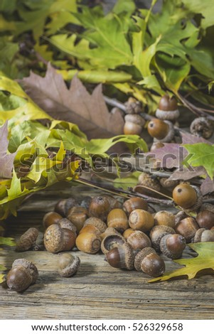 Acorns among oak branches on a wooden surface