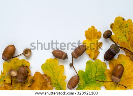 Acorns and oak leaves on white surface. Composition with plenty of room for text message - stock photo