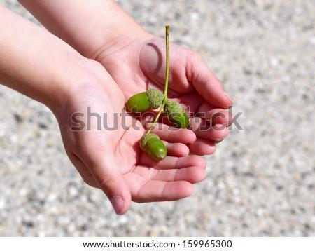 acorns in hand of child - stock photo