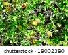 acorns in the wood - stock photo