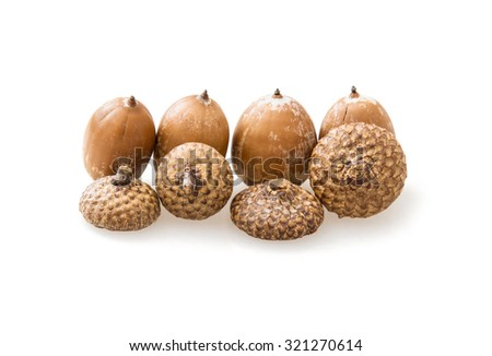 Acorns isolated on the white background. The acorn, or oak nut, is the nut of the oaks and their close relatives (genera Quercus and Lithocarpus, in the family Fagaceae). - stock photo